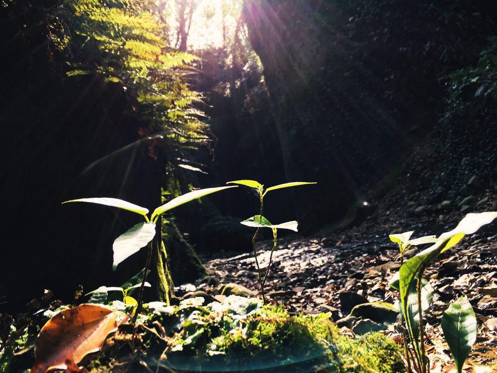 anomura_kochi_place_iokido-01-post